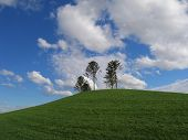 Hill at Dockland park