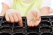 stock photo of germination  - Child sowing seeds into germination tray  - JPG