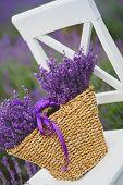 stock photo of lavender field  - Summer - JPG