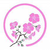 pic of sakura  - twig sakura blossoms in a circle - JPG