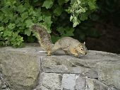 Squirrel on the move
