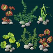 picture of algae  - Different kinds of algae and pebbles set on dark background - JPG