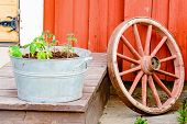 image of wagon wheel  - Red wagon wheel and zinc metal bucket with tomato plants in front of red wooden house - JPG