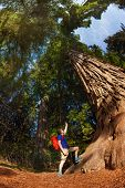 picture of redwood forest  - Man pointing at big tree in Redwood California during summer sunny day - JPG