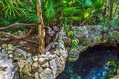 stock photo of cenote  - A cenote in the jungle near Playa del Carmen in Mexico. ** Note: Soft Focus at 100%, best at smaller sizes - JPG