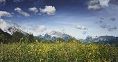 image of snow capped mountains  - Vignette style close up of wild grassy meadow with wild flowers - JPG
