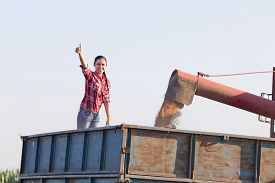 stock photo of tractor-trailer  - Satisfied young woman showing thumb up in the tractor trailer during wheat harvest - JPG
