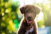 Labrador Puppy Dog With Bokeh Light poster