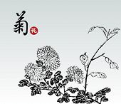 Vector of Chinese Traditional Pattern--Chrysanthemum,The Chinese Word Means