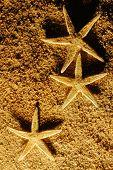 Starfish on sands