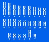 Vector of Human Chromosome