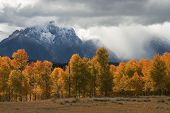 Storm and Aspens over the Tetons