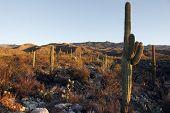 Colinas do Saguaro ao pôr do sol