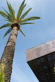 de young Museum und Palm abstrakt