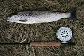 Freshly caught trout lying on the riverbank with fishing rod