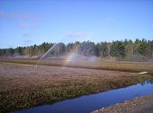 Irrigation And Rain Bow