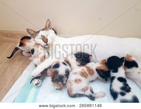 poster of Pet Animal; Cute Cat Indoor. Mother Cat And Baby Cat.