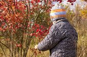 Boy Looks At The Bush In Autumn, Boy Standing Next To A Bush Viburnum In Autumn poster
