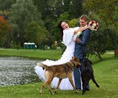 Bride And Groom Outside And Dogs