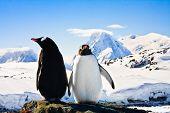 Zwei Pinguine träumen, sitzend auf einem Felsen, Berge im Hintergrund