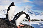 Pinguine stehen, Berge im Hintergrund