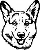 Animal Dog Pembroke Welsh Corgi 5T6.eps poster