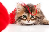 Cute little Siberian kitten with red clew isolated on white background