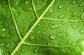 Macro of green tree leaf