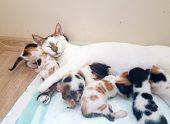 Pet Animal; Cute Cat Indoor. Mother Cat And Baby Cat. poster
