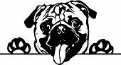 Animal Dog Pug Peeking 2.eps poster