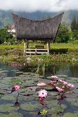 image of minangkabau  - Lotuses and house on the Samosir island - JPG