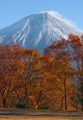 picture of mount fuji  - view of mount fuji from near narusawa - JPG