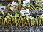 Wasabi Root For Sale
