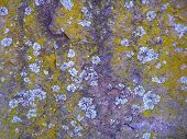 stock photo of fieldstone-wall  - close up of rock with lichen and moss - JPG