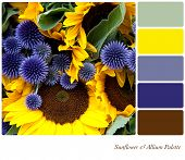 Sunflower and allium background colour palette with complimentary swatches.