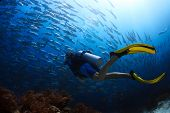 image of school fish  - Scuba diver finning towards school of Jack fish in a tropical sea - JPG