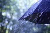 stock photo of rain  - Rain drops falling from a black umbrella - JPG