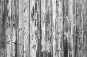 Black And White Texture Of Wood