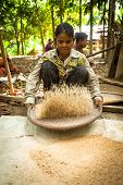 BERDUT, MALAYSIA - APR 8: Unidentified women Orang Asli thresh rice to remove chaff on Apr 8, 2013 i