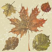 5 hand drawn autumn leaves