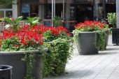 Street With Flower Pots