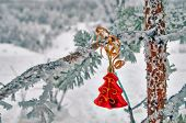Christmas Decoration On Pine  In The Woods.