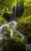 stock photo of vegetation  - waterfall and dense vegetation in green forest with moss - JPG