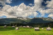 Sheepherd Cottages On Pokljuka Plateau In Slovenia Central Europe In Spring