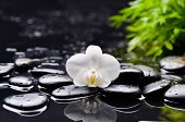 beautiful orchid with black stones and green plant