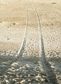 tyre tracks on the sand