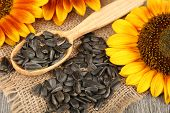stock photo of sunflower-seeds  - Sunflowers and seeds with spoon on table close up - JPG