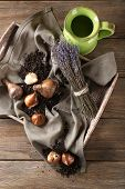 Flower bulbs with soil on sackcloth napkin and green jug on wooden background