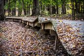 Boardwalk through Forest in Disrepair
