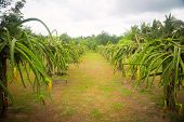 Plantation In Cloudy Weather